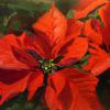 """Pointsettia"" 9x12"" oil on panel $175.00 US free shipping  Pay quickly by PayPal https://www.paypal.me/JRB516"
